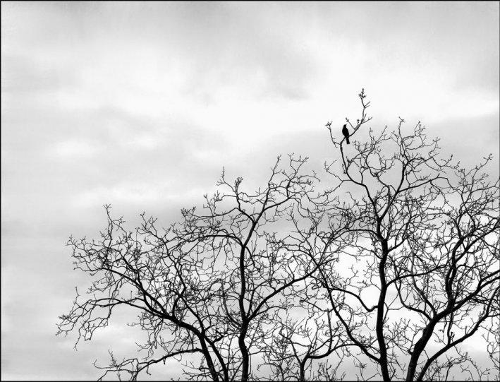 Итальянский фотограф Аугусто Кантамесса - №6