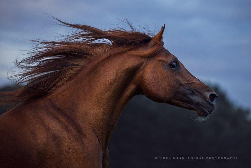 Фотограф Wiebke Haas - №4