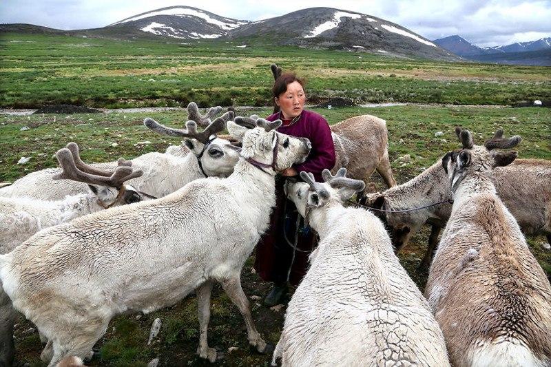 Кочевое племя оленеводов цаатан, Монголия