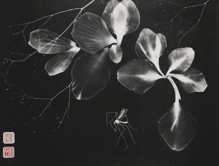 Фотограф Лонг Чинсан - №18