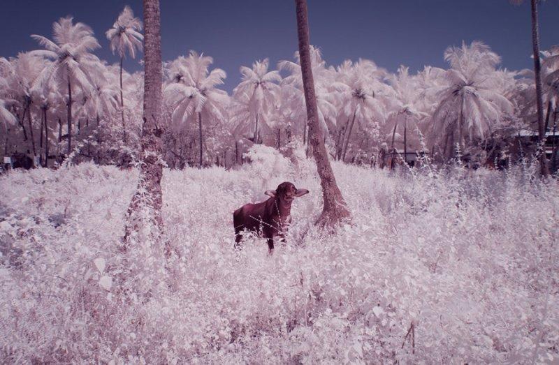 Фотограф Нимит Нигам - №16