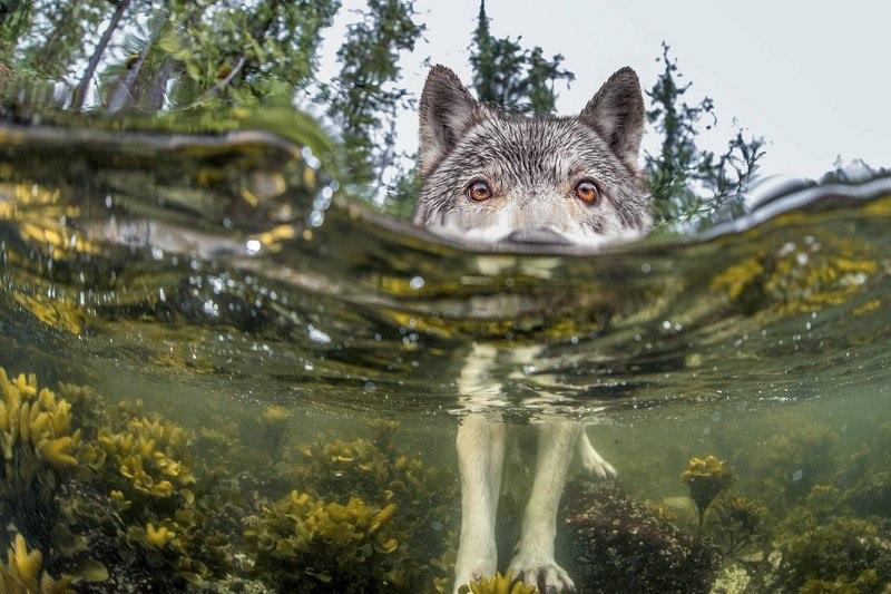 20 самых шедевральных снимков, сделанных для National Geographic - №7