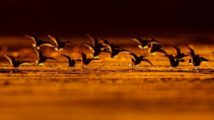 Bird Photographer of the Year - №3
