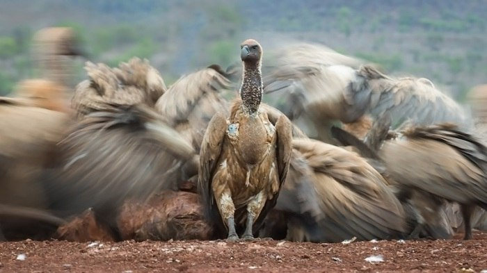 Bird Photographer of the Year - №7
