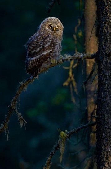 Bird Photographer of the Year - №19