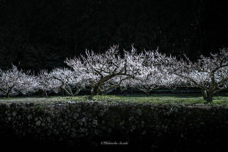 Фотограф Хиденобу Сузуки - №3