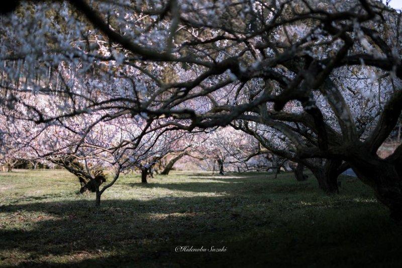 Фотограф Хиденобу Сузуки - №11