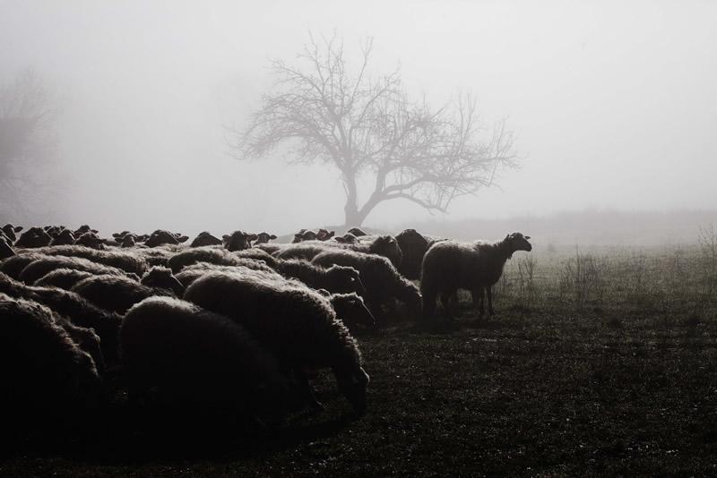 Фотограф Марко Сгарби - №4