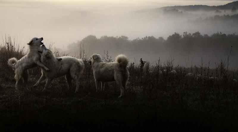 Фотограф Марко Сгарби - №16