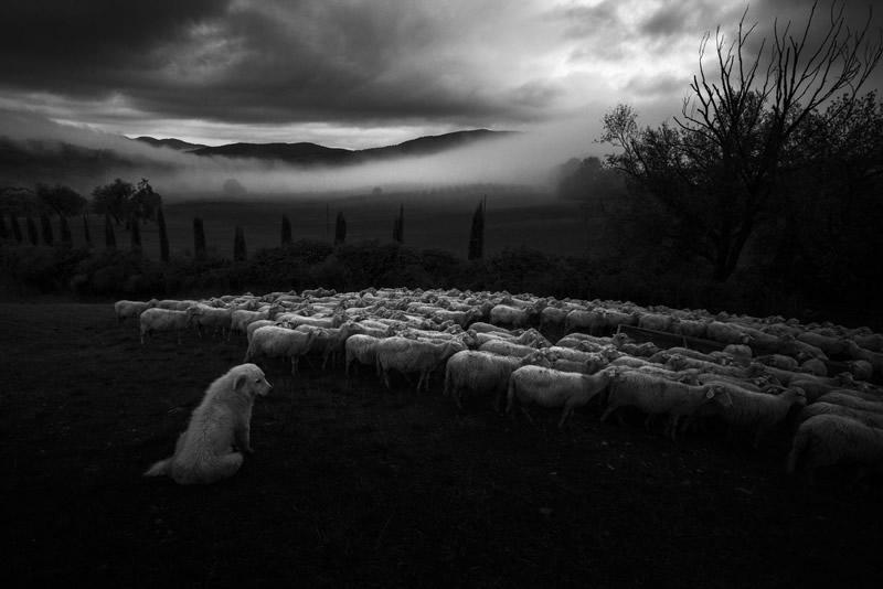Фотограф Марко Сгарби - №20