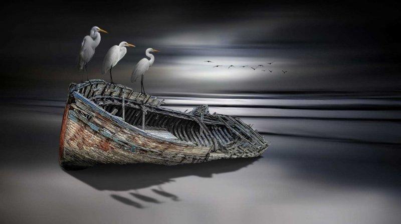 Фотограф Nasser Osman - №10