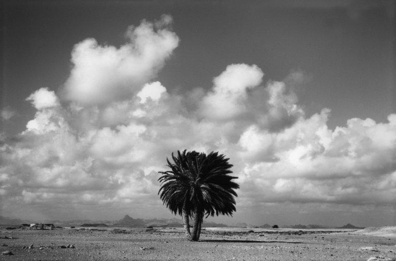 Фотограф Раймон Депардон - №17