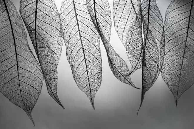 Абстрактное искусство в простых листьях - №1