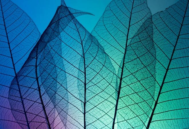 Абстрактное искусство в простых листьях - №12
