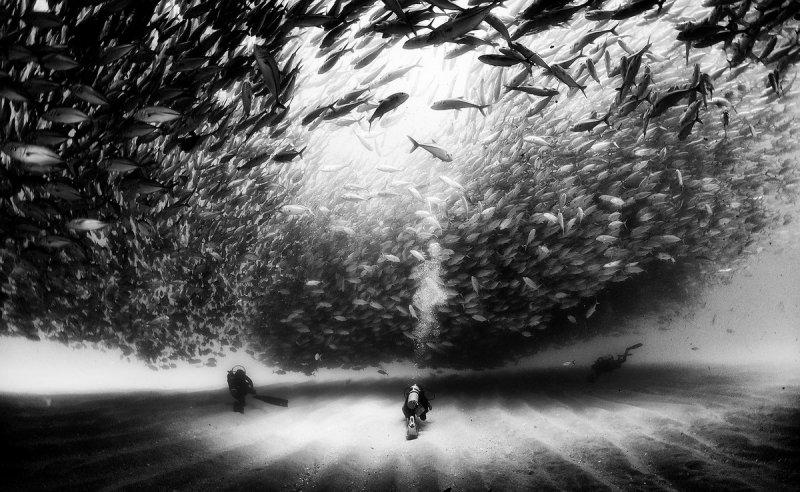 Жизнь под водой от фотографа Ануара Патьяне - №8