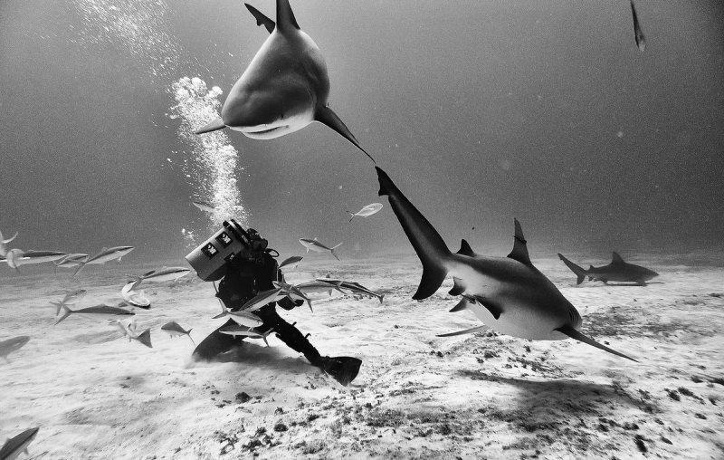 Жизнь под водой от фотографа Ануара Патьяне - №13