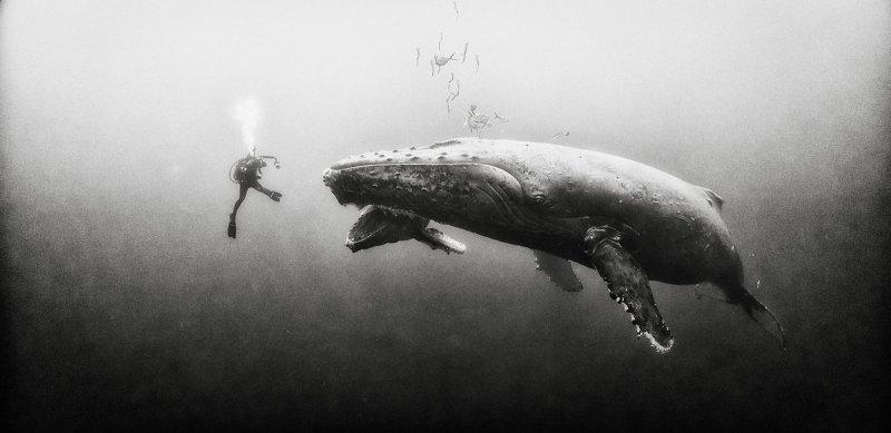 Жизнь под водой от фотографа Ануара Патьяне - №19