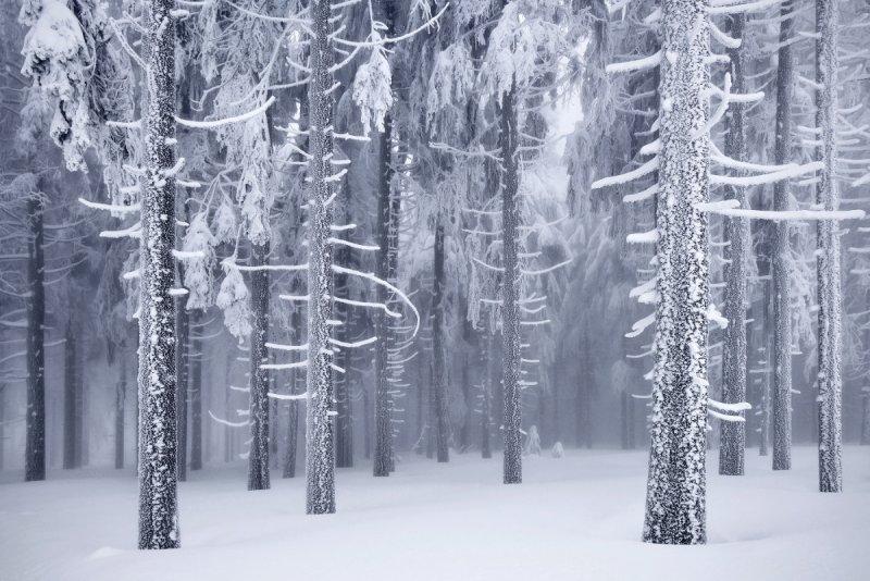 Килиан Шоенбергер «Зимняя сказка» - №2
