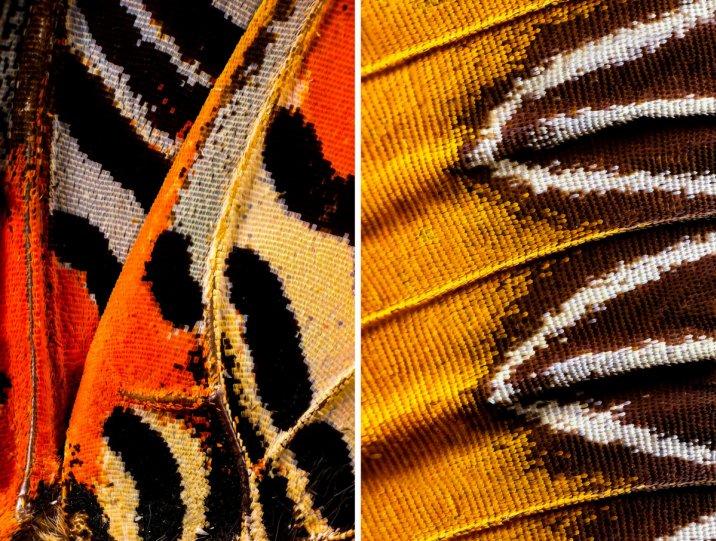 «Крылья бабочек». Фотограф Крис Перани - №3