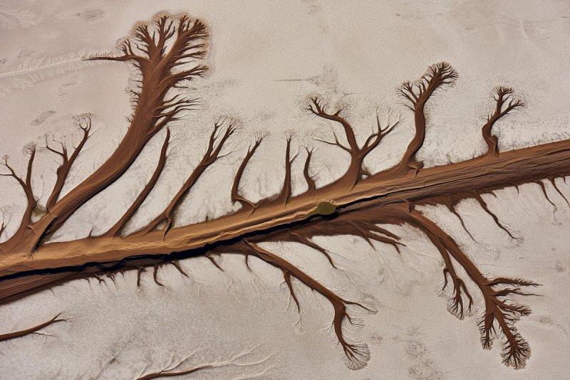 Дельта реки Колорадо в форме дерева в штате Нижняя Калифорния, Мексика.