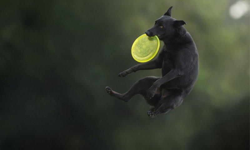 Собаки в фотографиях Клаудио Пикколи - №3