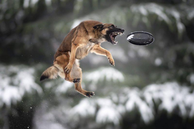 Собаки в фотографиях Клаудио Пикколи - №2