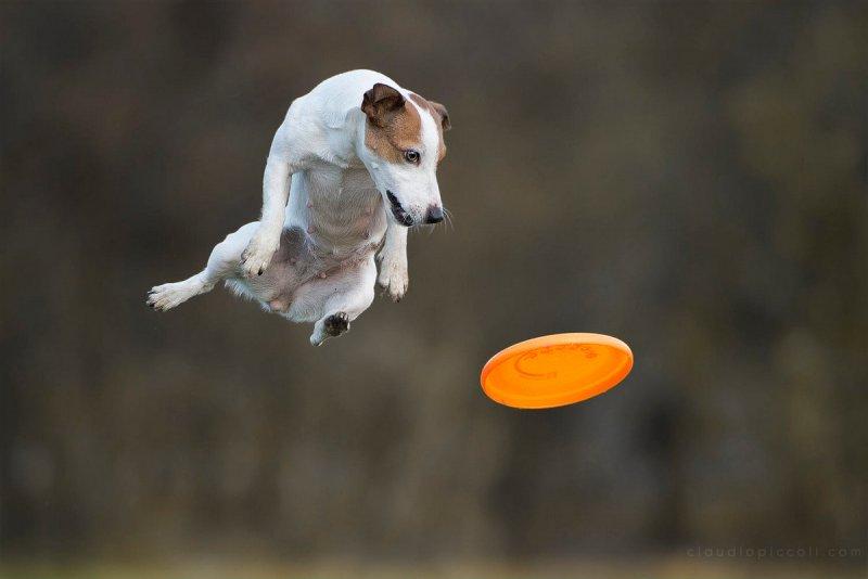 Собаки в фотографиях Клаудио Пикколи - №14