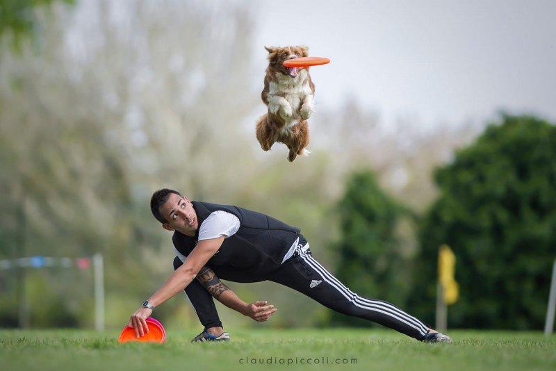 Собаки в фотографиях Клаудио Пикколи - №17