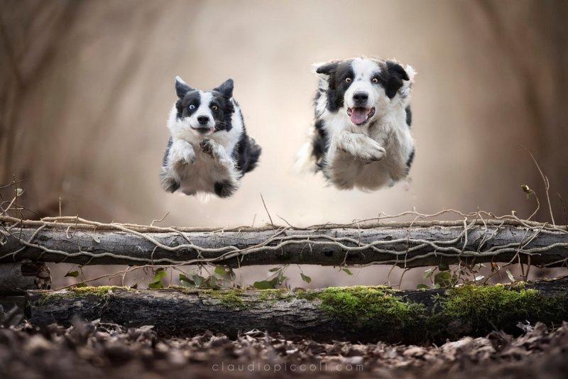 Собаки в фотографиях Клаудио Пикколи - №26