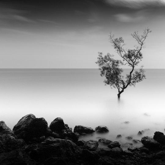 Фотограф Патриция Соон - №8