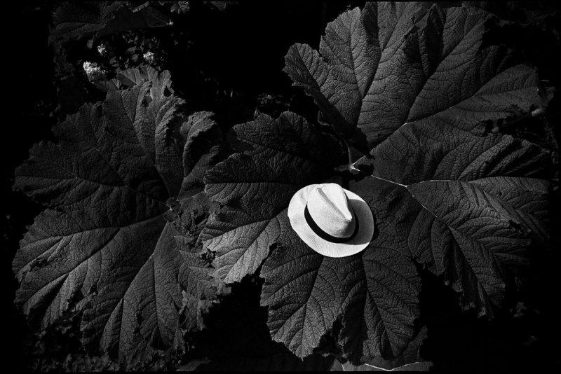 Фотограф Сирил Дрюар - №8