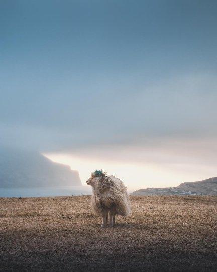 Фотограф Раннва Йонсен - №19