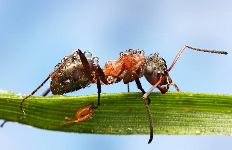Мир насекомых - №17