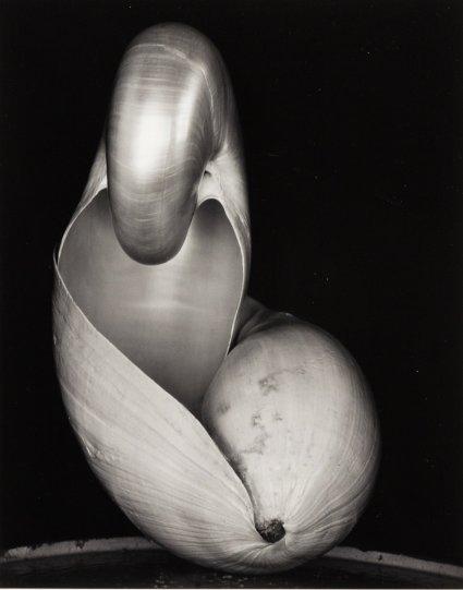 Фотограф Эдвард Уэстон - №21