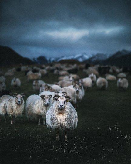 Профессиональный фотограф CanonNordicизИсландии - №3