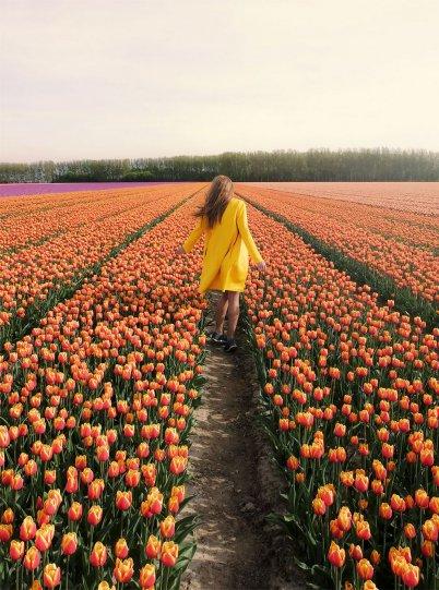 Фотографии из Нидерландов - №7