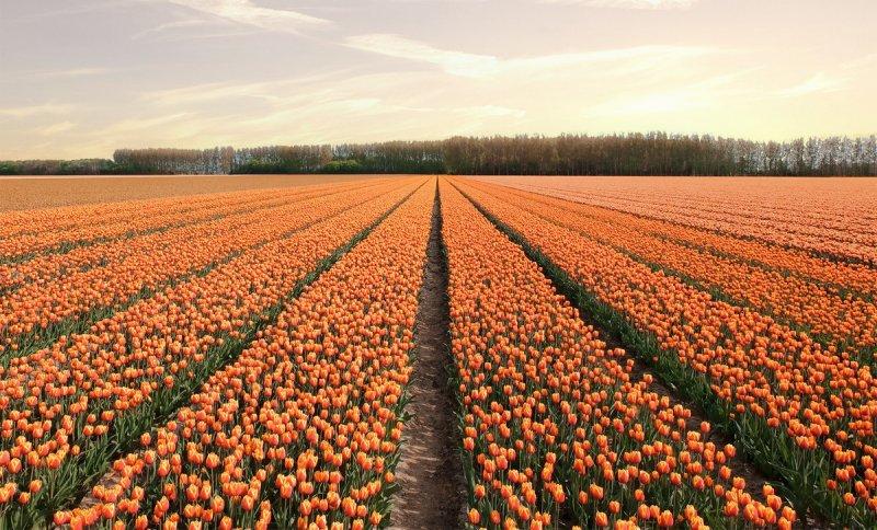 Фотографии из Нидерландов - №2
