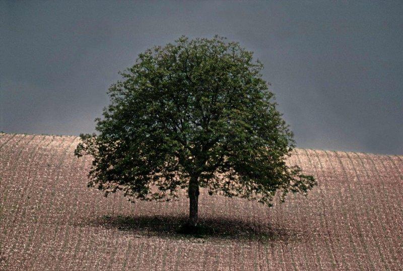 Портреты деревьев - №1
