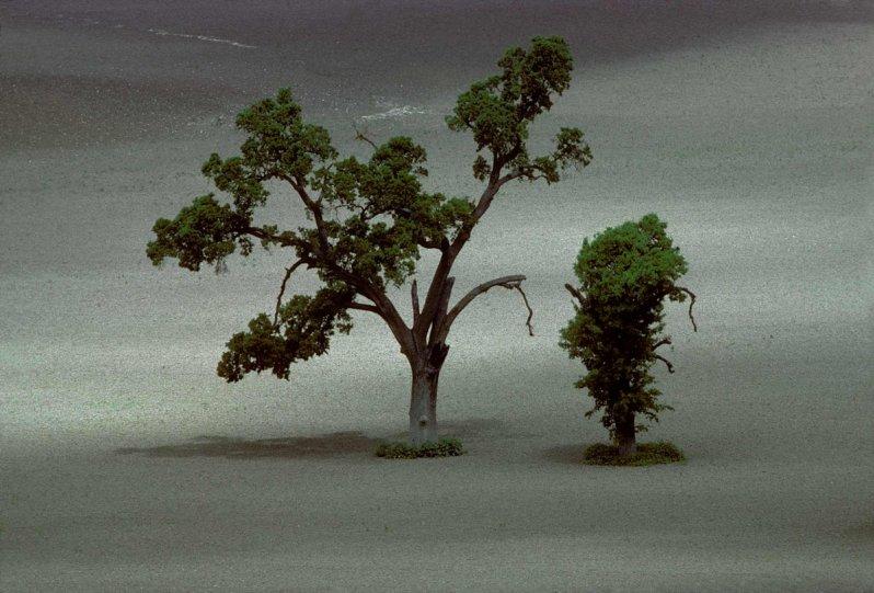 Портреты деревьев - №13