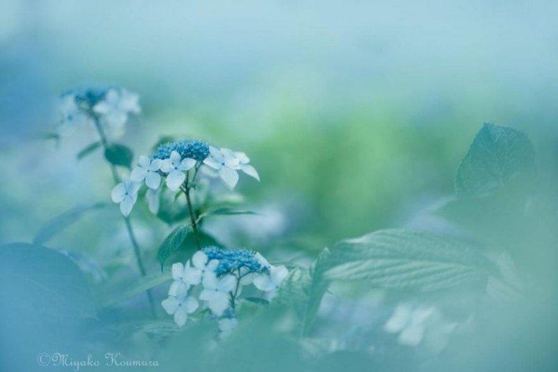 Фотограф Miyako Koumura - №5