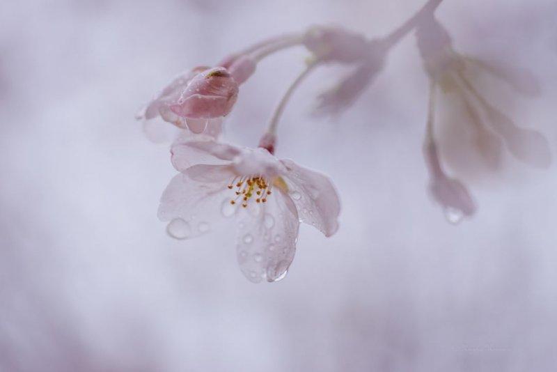 Фотограф Miyako Koumura - №8