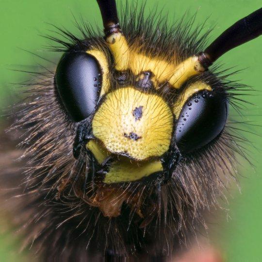 Макросъёмка насекомых - №6