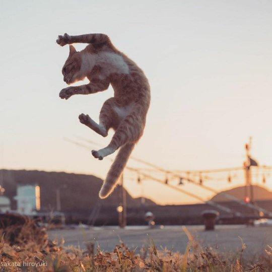 Японский фотограф Хисаката Хараюки исполнил мечту многих! - №4