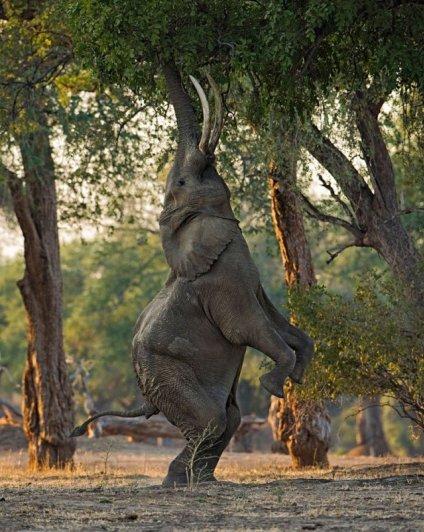 Новости в фотографиях - National Geographic Photo Contest 2013 (Часть 2) - №9