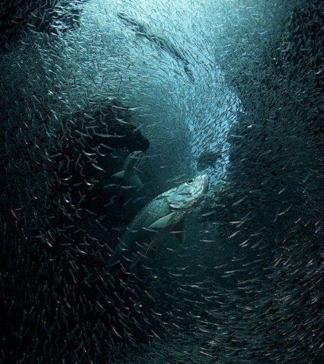 Новости в фотографиях - National Geographic Photo Contest 2013 (Часть 2) - №17