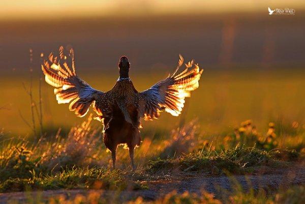 Фото съемка птиц. Лучший момент в кадре - №20
