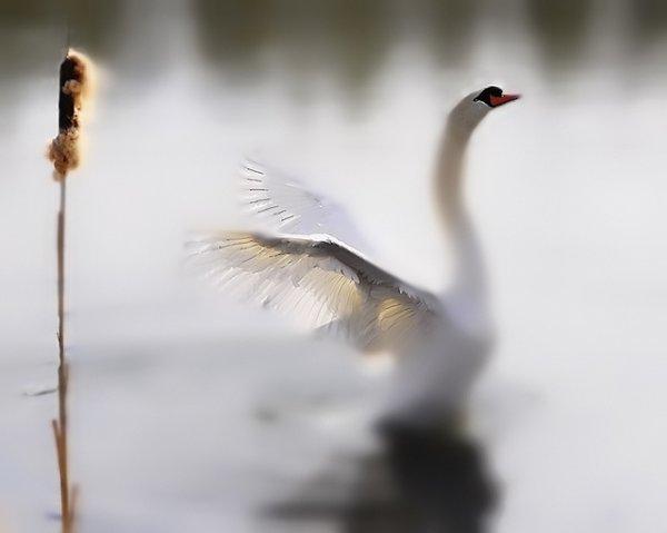 Фото съемка птиц. Лучший момент в кадре - №24