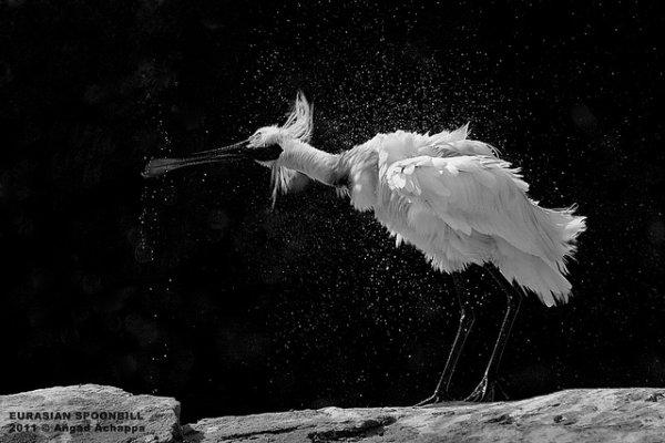 Фото съемка птиц. Лучший момент в кадре - №28