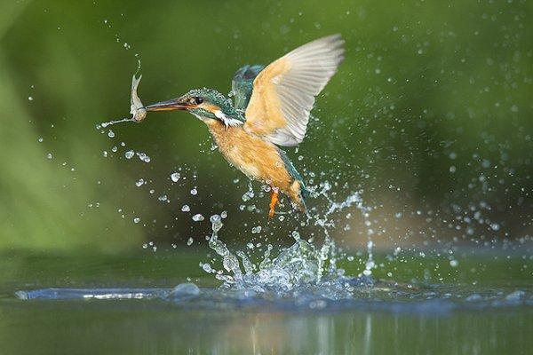 Фото съемка птиц. Лучший момент в кадре - №40
