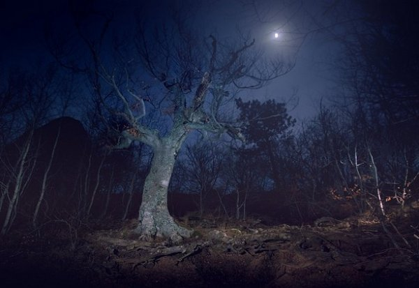 Зимние фото пейзажи из Крыма - №18